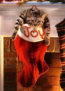 joy-cat